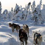 chiens-vieaventures01