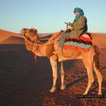 dromadaire_its4youtours_agadir_maroc