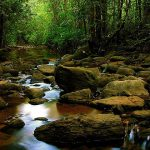 sinharja_forest_sri_lanka_tour_guide_8