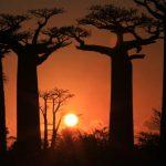 allee_de_baobab