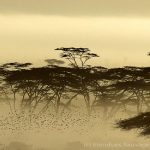 Ambiance dans le Serengeti