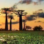 lih-baobab-alley