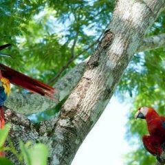 À l'assaut des attraits naturels du Costa Rica
