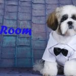 ZooRoom-Chien-Toit-499x224-Logo-Optimized