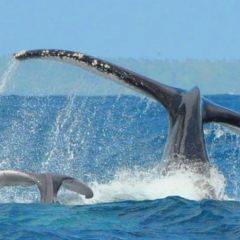 Les règles d'or pour un safari baleine réussi
