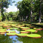 jardin-de-Pamplemousses-ile-Maurice