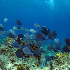 3 spots de plongée immanquables à Deshaies