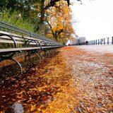 Visiter New York en automne : les festivités incontournables