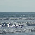 Banniere-mer-de-Celine-Photos-Art-Nature