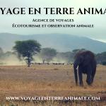visuel VOYAGE EN TERRE ANIMALE (2)