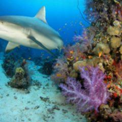 Plongée sous marine à Madagascar