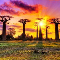 Préparer un séjour de rêve sur l'île de Madagascar