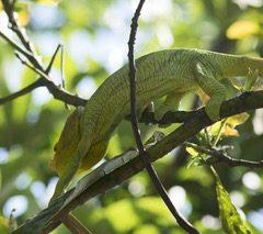 Madagascar – Un séjour nature à l'est de la capitale !