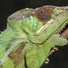 Madagascar : Macolline un site écotouristique d'une belle verdure