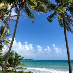Des vacances hors du commun pour découvrir la Martinique autrement