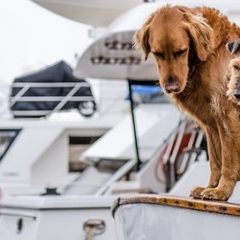 Partir aux Etats-Unis avec votre chien: bonne ou mauvaise idée?