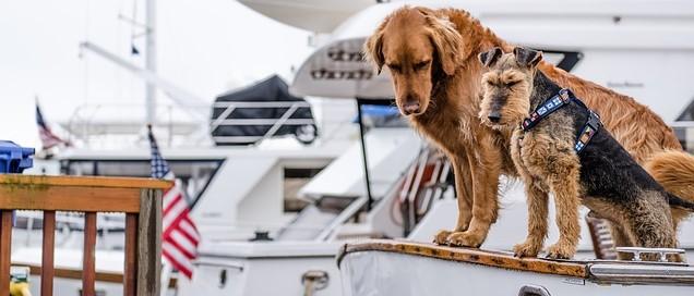 partir avec son chien aux etats unis