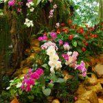 orchidées-