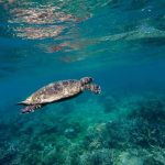 faune marine 1