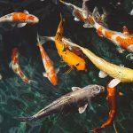 faune marine malgache