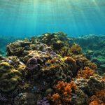 koh rong samloem_magnifiques coraux - Copie
