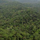 La reforestation du poumon vert de la planète.