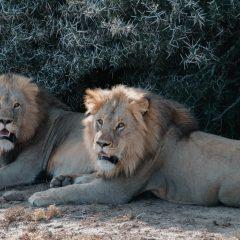 Partir découvrir les animaux africains en Afrique du Sud lors d'un volontariat