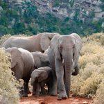 voluntariat-afrique-sud-elephant-voyage