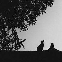 A la découverte des plus beaux chats d'Asie