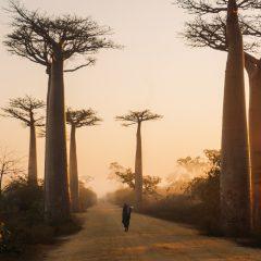 Voyage à Madagascar : quelles sont les meilleurs destinations ?