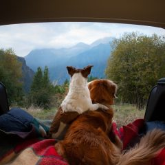 Guide pour voyager avec votre chien